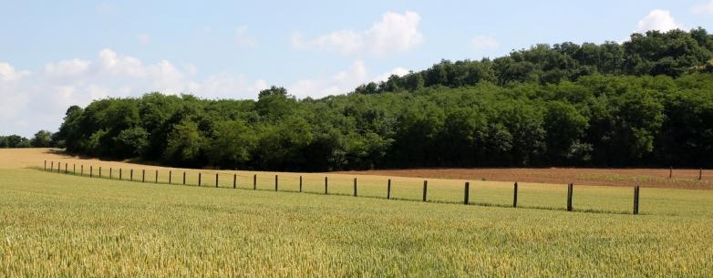 Agroforesterie2